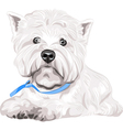 dog West Highland White Terrier breed vector image vector image