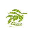 green olives vector image vector image
