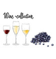 three glasses of wine and grape cluster isolated vector image vector image