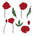 drawing flowers poppy flower clip-art vector image