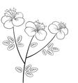 Pretty flower line art vector image vector image