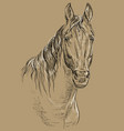 horse portrait-19 on brown background vector image vector image