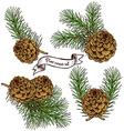 Pine cone set with robbon vector image vector image