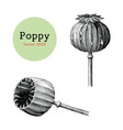 poppy hand drawing vintage clip art isolated on vector image vector image