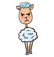 angry sheep on white background vector image