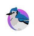 Blue Jay Flat Design vector image vector image