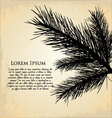 pine branch background vector image vector image