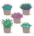 set with a beautiful succulents cartoon vector image