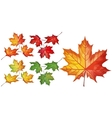 Set with maple leaves vector image vector image