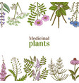 template with medicinal plants in hand-drawn style vector image vector image
