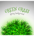 Grass Layout vector image vector image