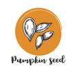 pumpkin seed vintage hand drawing of seeds vector image