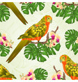 seamless texture sun conure parrot standing with vector image vector image