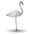 abstract flamingo in origami style on white vector image