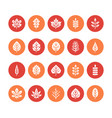 autumn leaves flat glyph icons leaf types rowan vector image