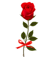 Beauty red rose with bow vector image