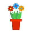 Spring colorful garden flowers in pot vector image