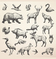 european forest wild animals collection vector image