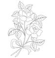 flowers rose contour vector image
