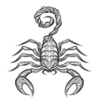 scorpion entangle icon vector image vector image