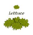 tasty veggies lettuce vector image vector image