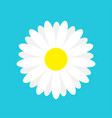 white daisy chamomile marguerite icon cute flower vector image
