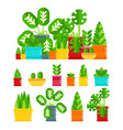 set of house plants colourful plants isolated vector image