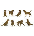 animal dog labrador character icon set in flat vector image vector image