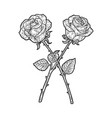 crossed roses sketch vector image vector image