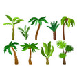flat set of different kinds of palm trees vector image