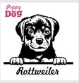 puppy rotweiller - peeking dogs - breed face head vector image vector image