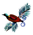 wilson s bird-of-paradise in brown color isolated vector image vector image