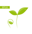 growing plant vector image vector image