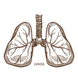 lungs respiratory system internal organ isolated vector image