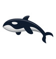 orca whale icon cartoon style vector image