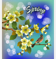 spring all wakes up flowers vector image