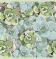 spring flower seamless pattern with succulent vector image