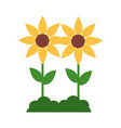 yellow flowers decoration vector image