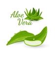 aloe vera plant and its parts