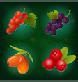 berry icon set on green background vector image