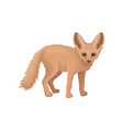 detailed flat icon of cute fennec small vector image