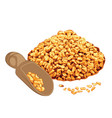 fenugreek in a bowl vector image