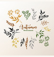 herbal design elements collection set hand vector image