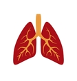 human lungs icon vector image