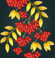 mountain ash pattern fall autumn vector image vector image