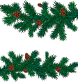 some green spruce branches with cones vector image