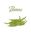 tasty veggies beans vector image