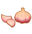 unpeeled raw garlic bulb and two cloves isolated vector image vector image