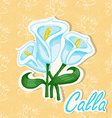 background with a flower Hand drawing of Ca vector image vector image