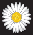 Daisy flower isolated on black vector image